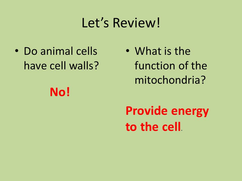 Let's Review! No! Provide energy to the cell.