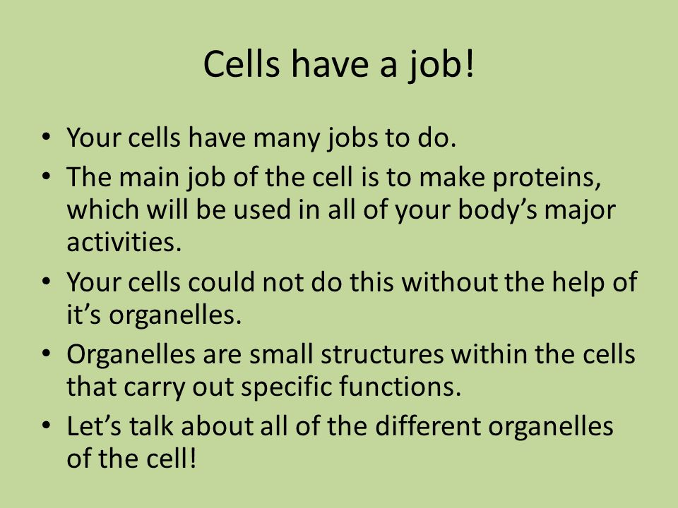 Cells have a job! Your cells have many jobs to do.