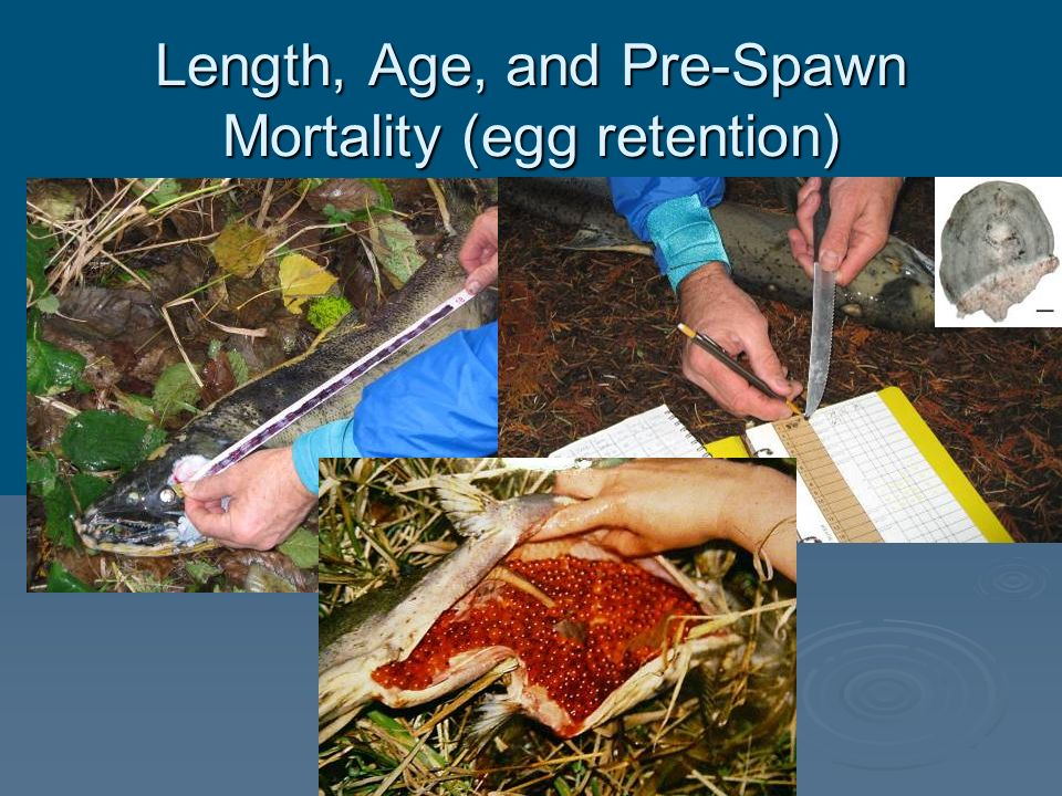 Length, Age, and Pre-Spawn Mortality (egg retention)