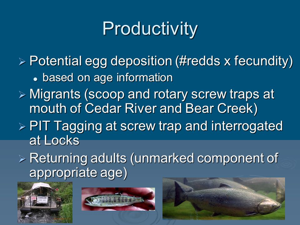 Productivity Potential egg deposition (#redds x fecundity)