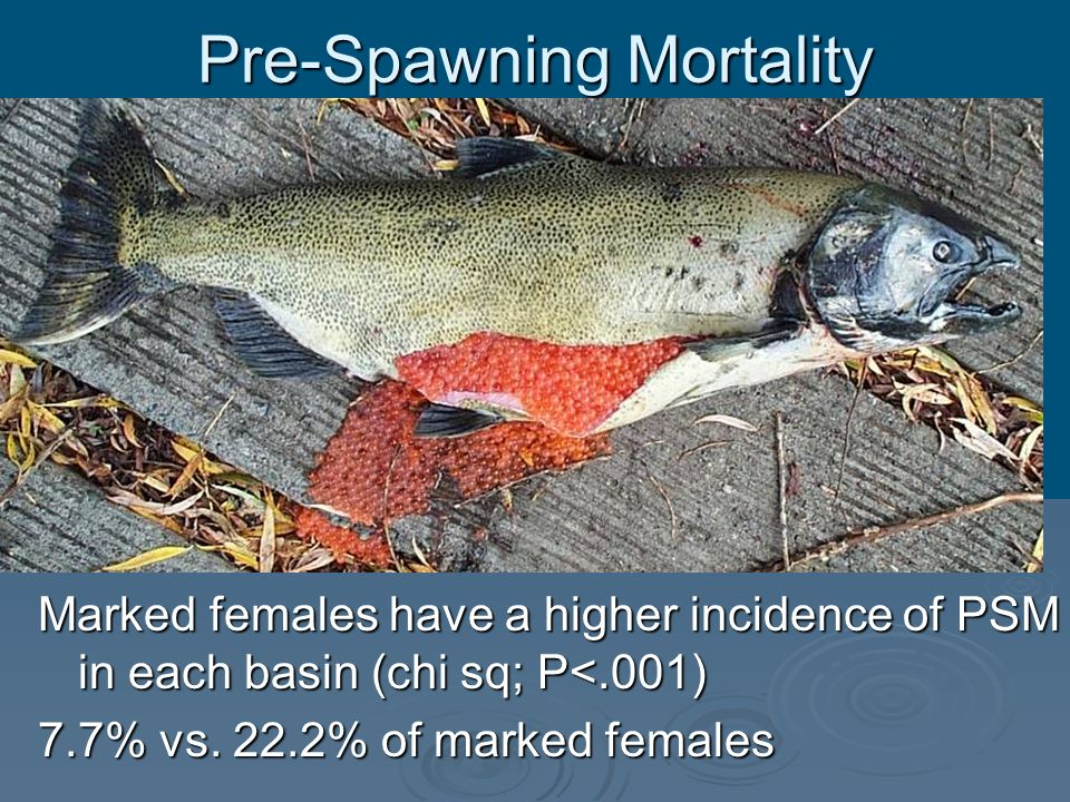 Pre-Spawning Mortality