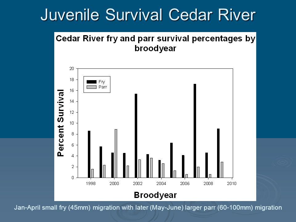 Juvenile Survival Cedar River