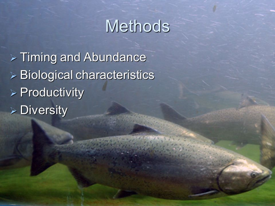 Methods Timing and Abundance Biological characteristics Productivity