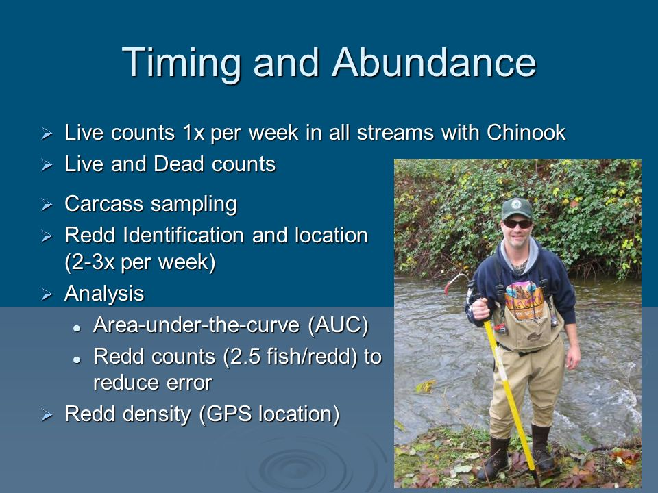 Timing and Abundance Live counts 1x per week in all streams with Chinook. Live and Dead counts. Carcass sampling.