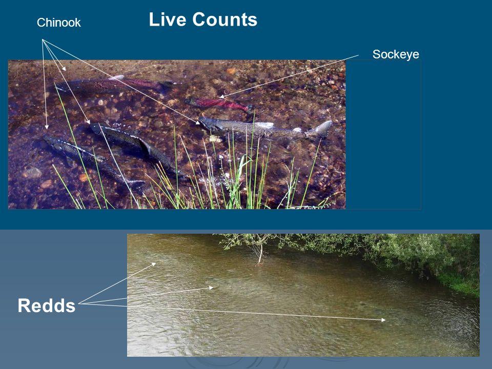 Live Counts Sockeye Chinook Redds