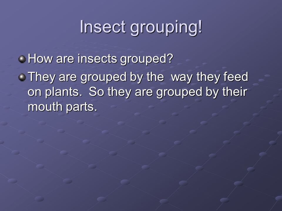 Insect grouping! How are insects grouped