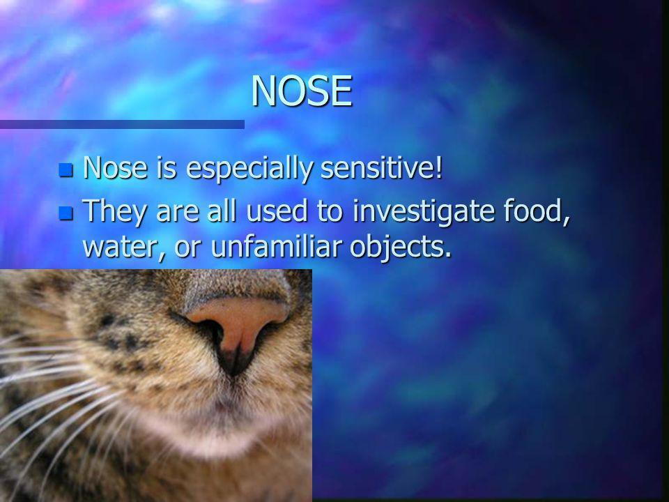 NOSE Nose is especially sensitive!