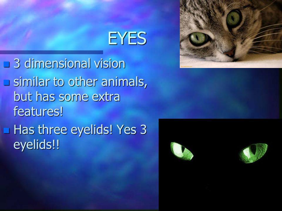 EYES 3 dimensional vision