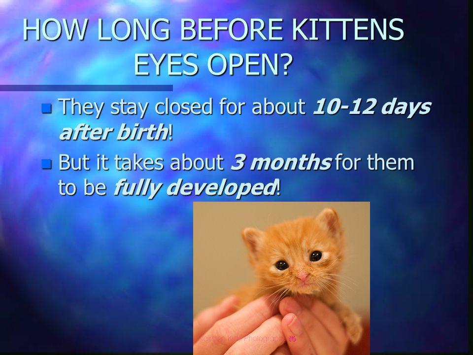 HOW LONG BEFORE KITTENS EYES OPEN