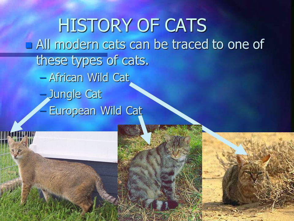 HISTORY OF CATS All modern cats can be traced to one of these types of cats. African Wild Cat. Jungle Cat.