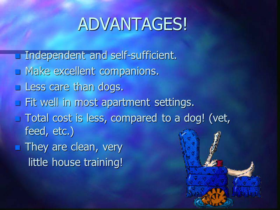 ADVANTAGES! Independent and self-sufficient.