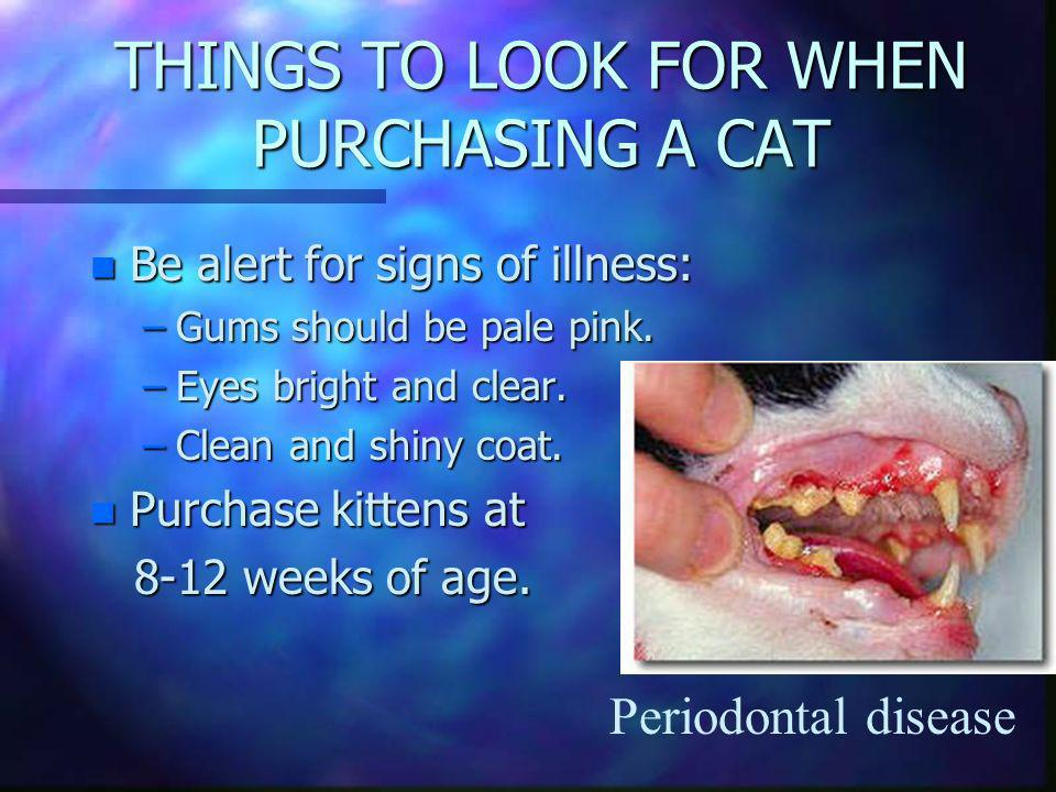 THINGS TO LOOK FOR WHEN PURCHASING A CAT