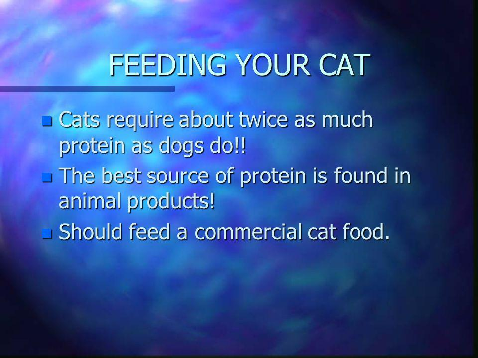 FEEDING YOUR CAT Cats require about twice as much protein as dogs do!!