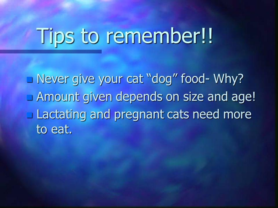 Tips to remember!! Never give your cat dog food- Why