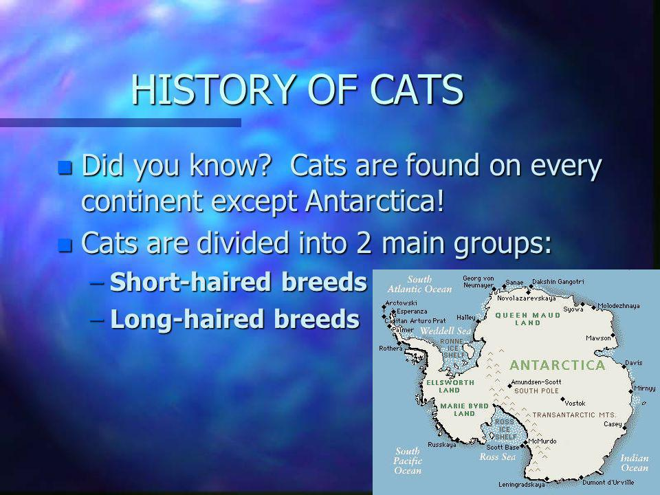 HISTORY OF CATS Did you know Cats are found on every continent except Antarctica! Cats are divided into 2 main groups: