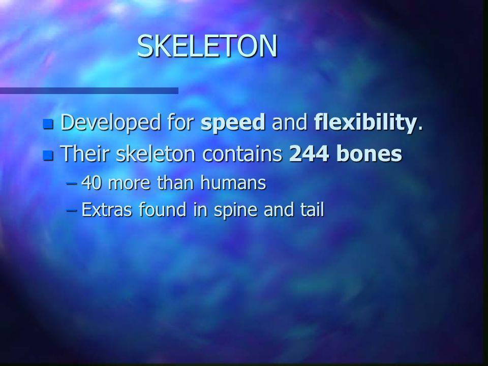 SKELETON Developed for speed and flexibility.