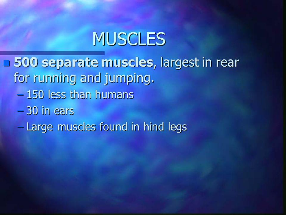 MUSCLES 500 separate muscles, largest in rear for running and jumping.