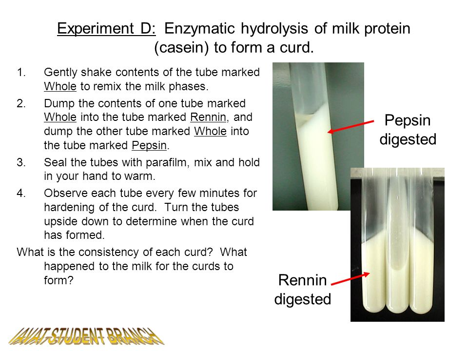 Experiment D: Enzymatic hydrolysis of milk protein (casein) to form a curd.