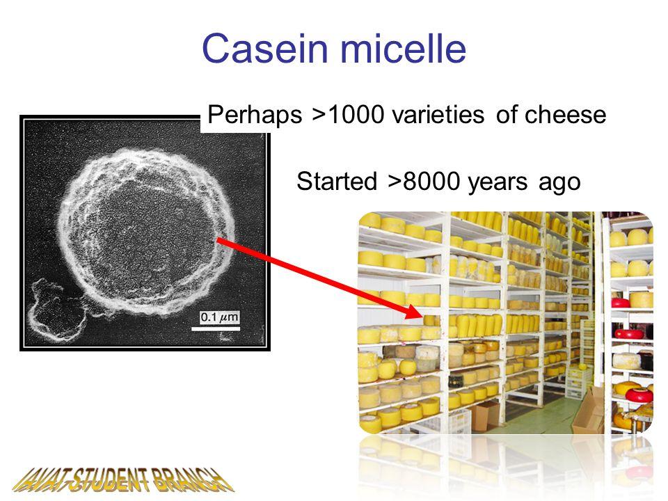 IAVAT STUDENT BRANCH Casein micelle