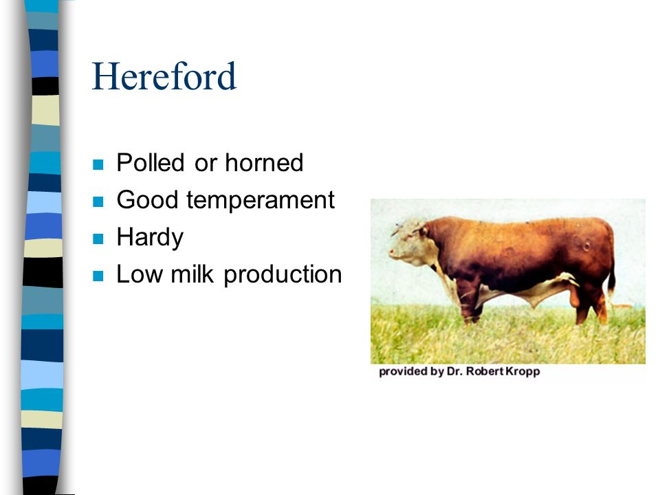 Hereford Polled or horned Good temperament Hardy Low milk production