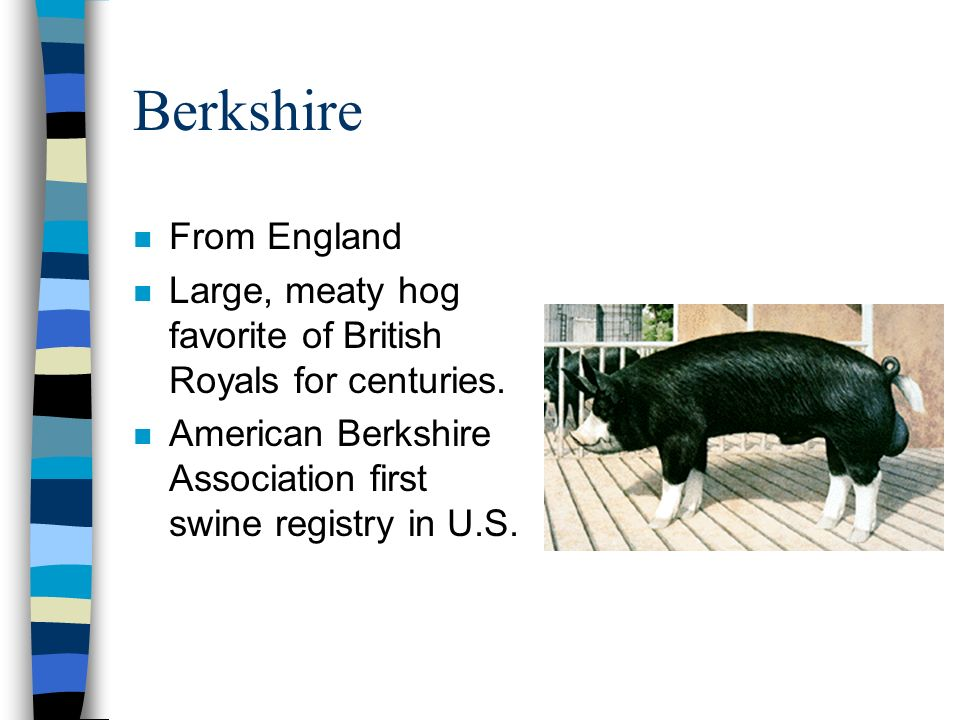 Berkshire From England