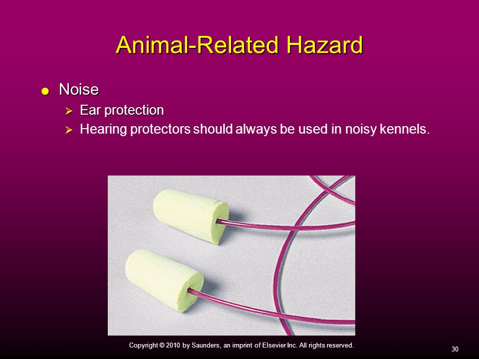 Animal-Related Hazard