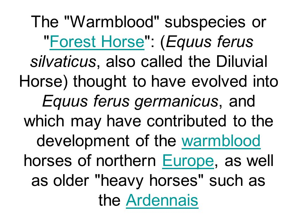 The Warmblood subspecies or Forest Horse : (Equus ferus silvaticus, also called the Diluvial Horse) thought to have evolved into Equus ferus germanicus, and which may have contributed to the development of the warmblood horses of northern Europe, as well as older heavy horses such as the Ardennais