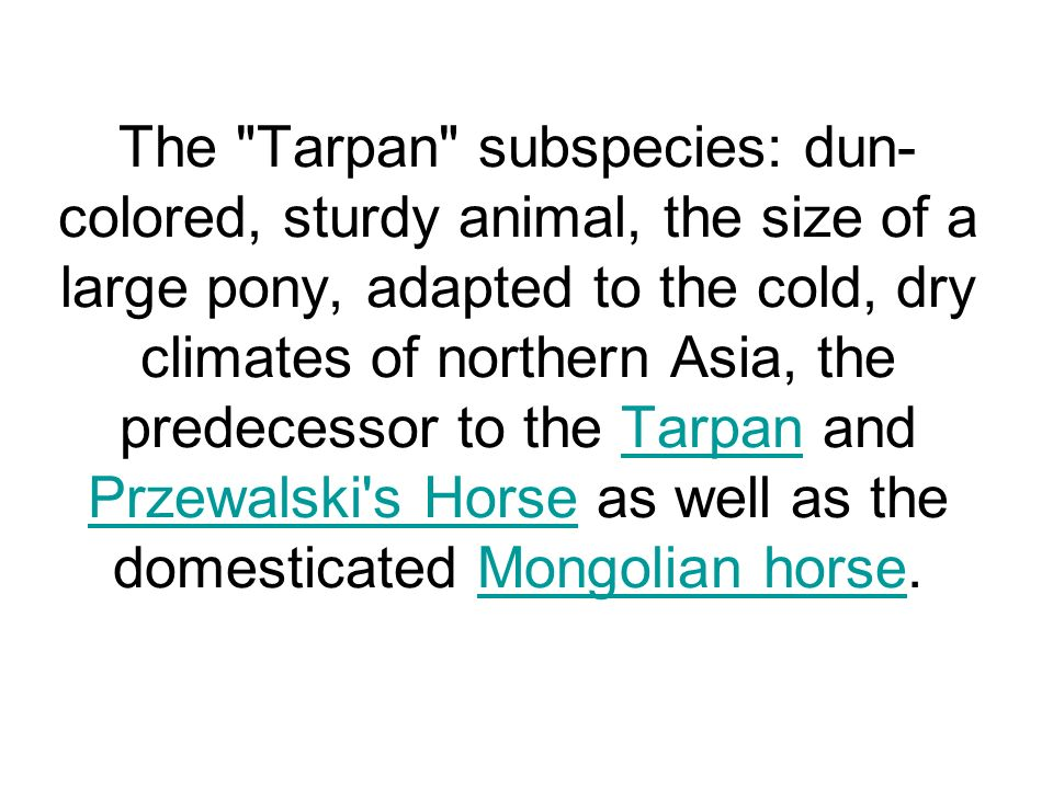 The Tarpan subspecies: dun-colored, sturdy animal, the size of a large pony, adapted to the cold, dry climates of northern Asia, the predecessor to the Tarpan and Przewalski s Horse as well as the domesticated Mongolian horse.
