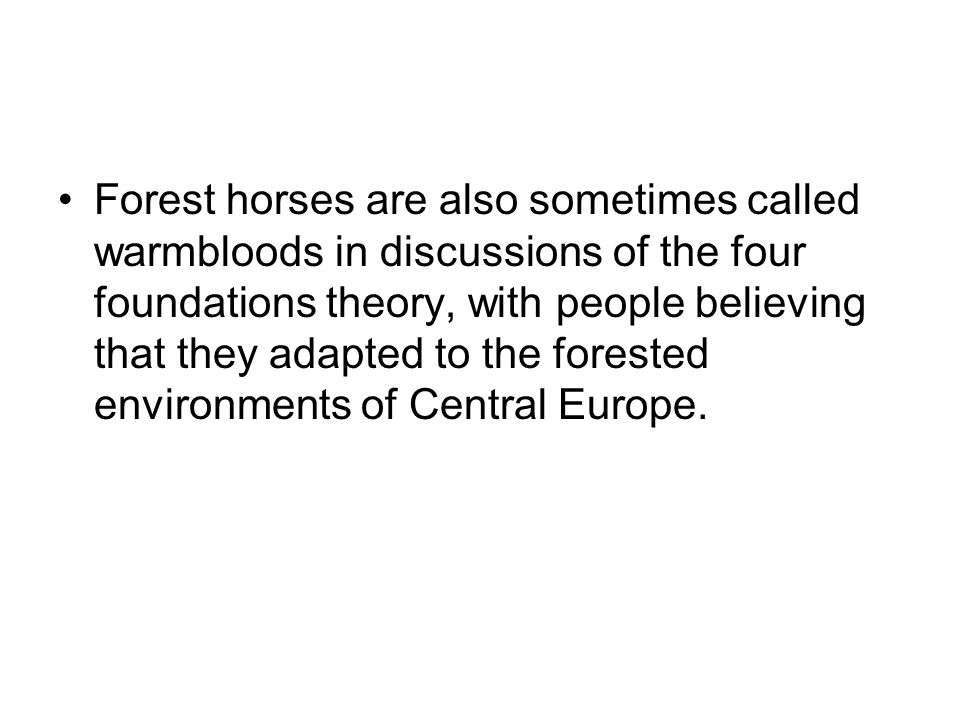 Forest horses are also sometimes called warmbloods in discussions of the four foundations theory, with people believing that they adapted to the forested environments of Central Europe.