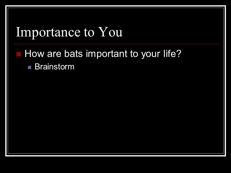Importance to You How are bats important to your life Brainstorm