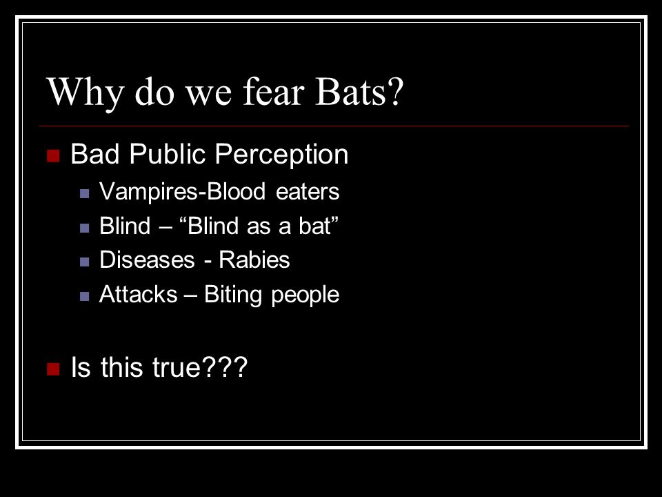 Why do we fear Bats Bad Public Perception Is this true