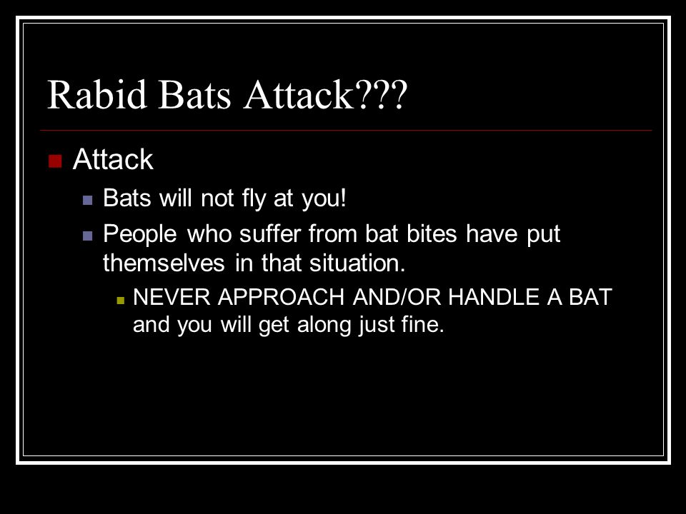 Rabid Bats Attack Attack Bats will not fly at you!