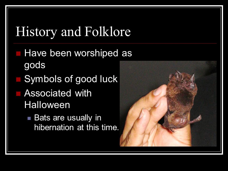 History and Folklore Have been worshiped as gods Symbols of good luck
