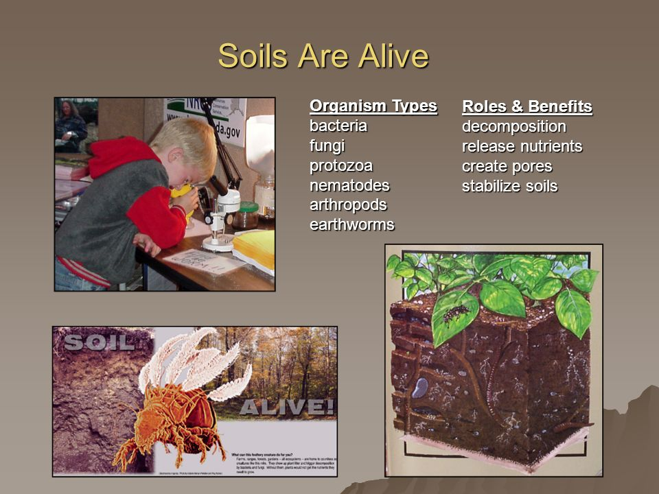 Soils Are Alive Organism Types bacteria fungi protozoa nematodes