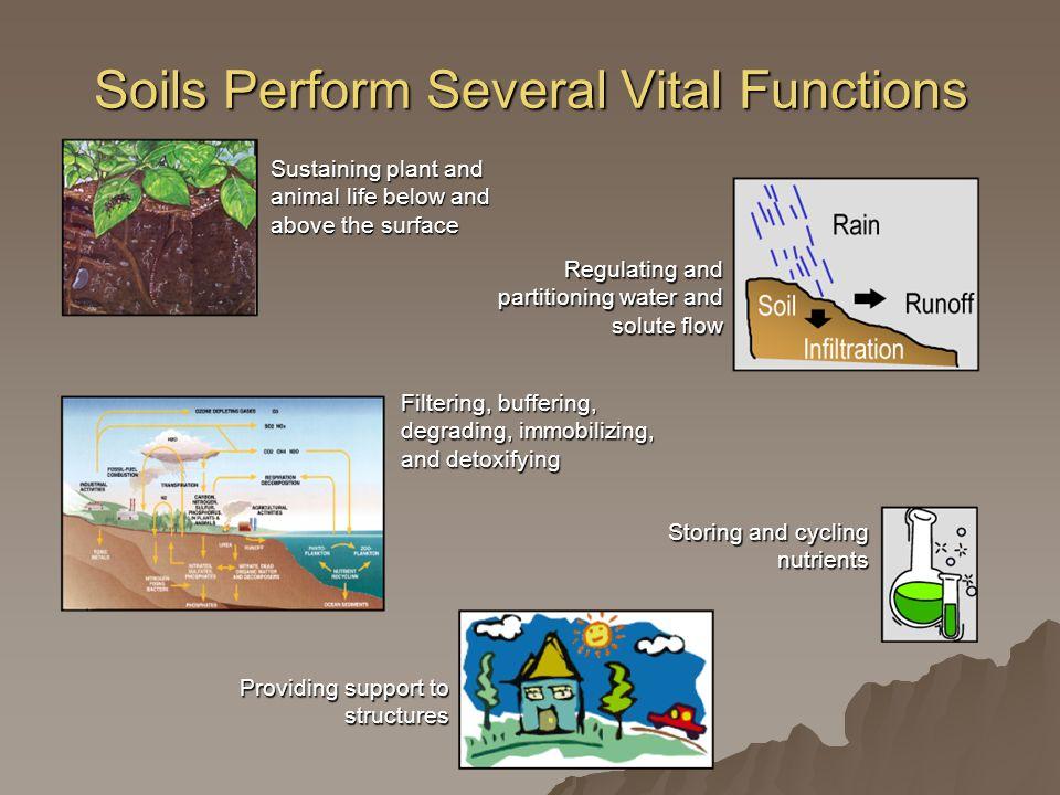 Soils Perform Several Vital Functions