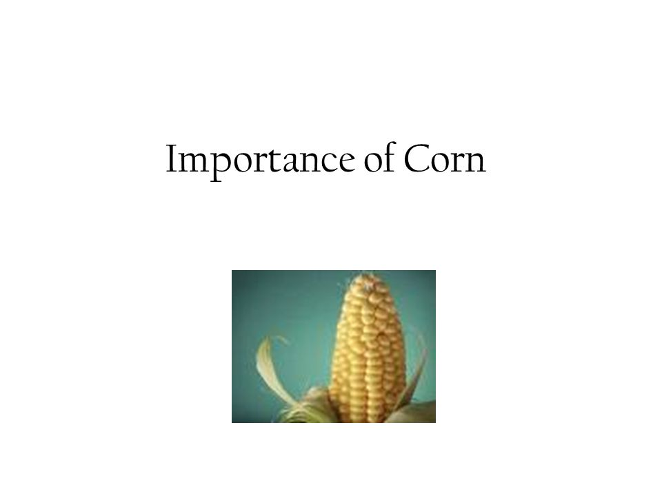 Importance of Corn