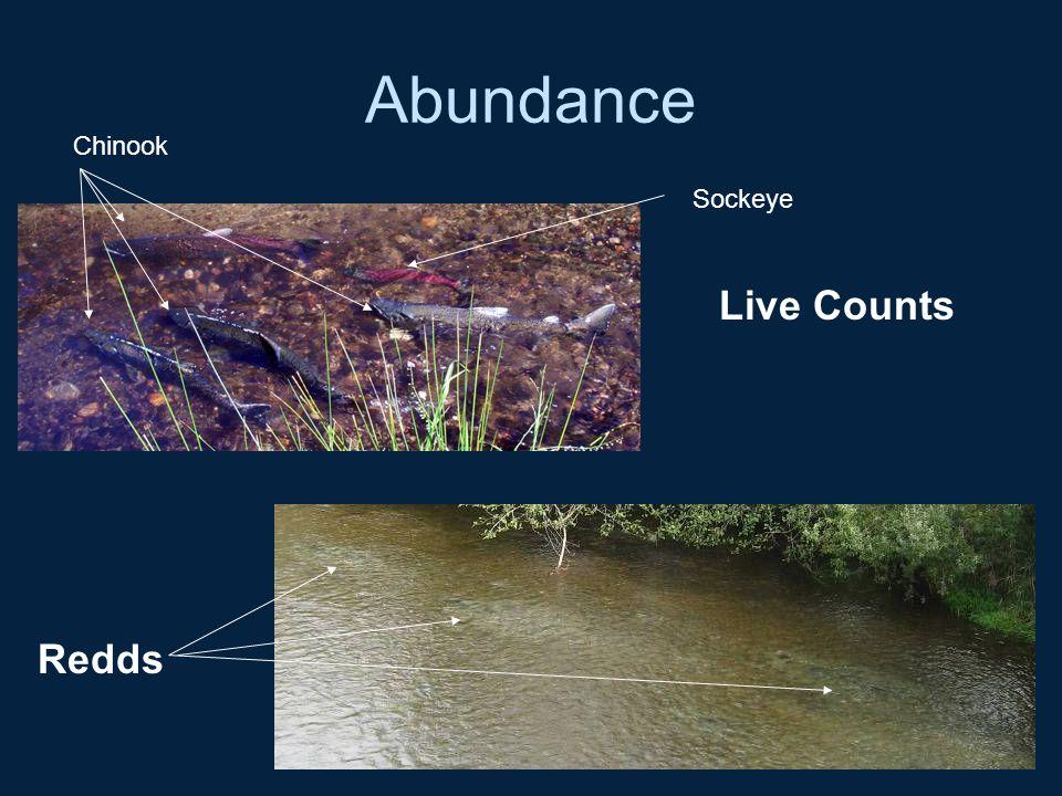 Abundance Chinook Sockeye Live Counts Redds