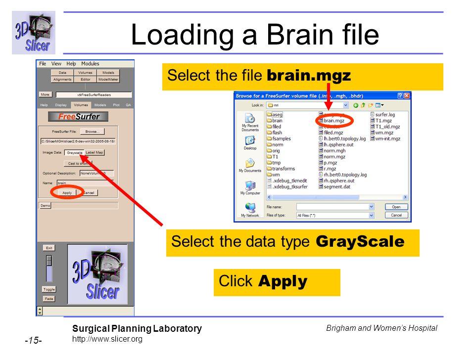 Loading a Brain file Select the file brain.mgz