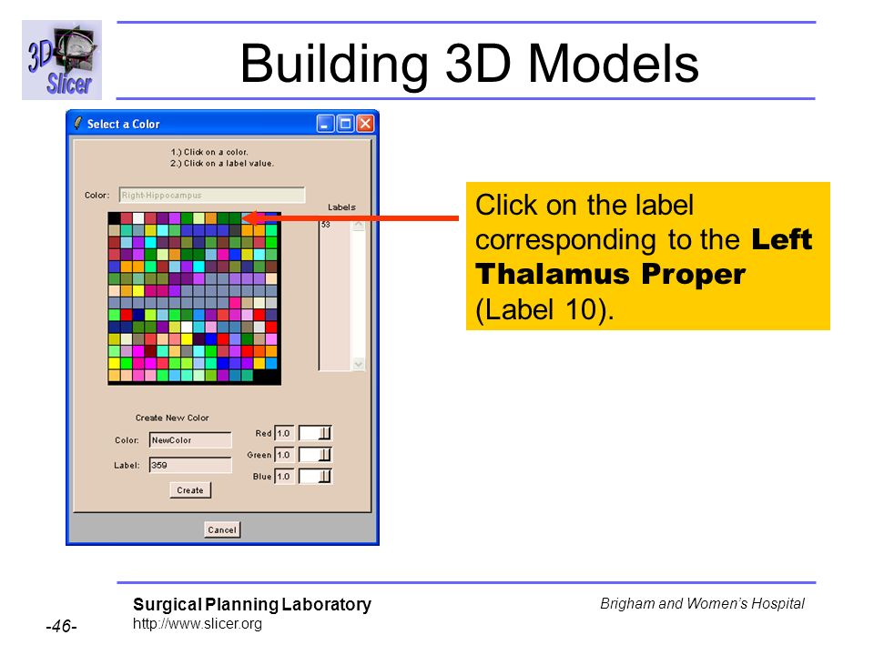 Building 3D Models Click on the label corresponding to the Left Thalamus Proper (Label 10).