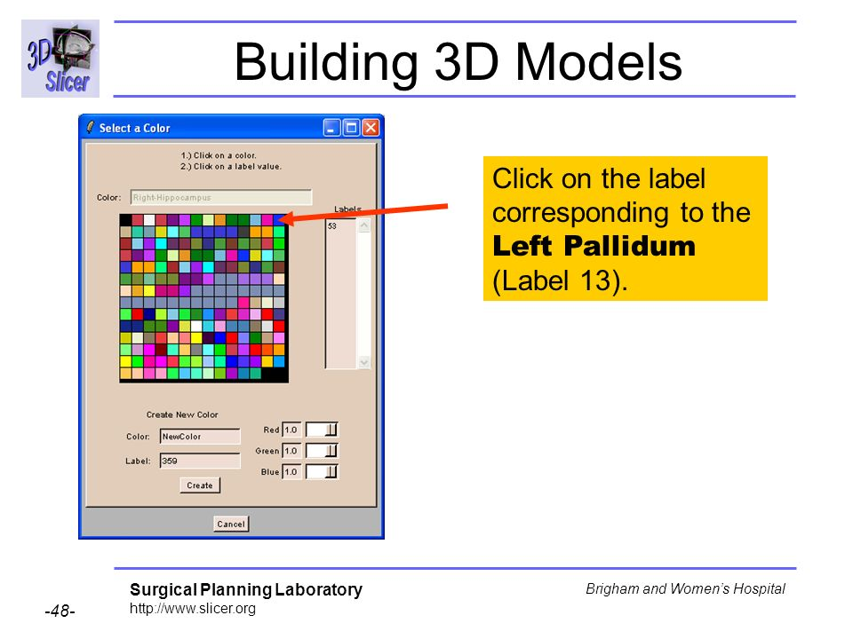 Building 3D Models Click on the label corresponding to the Left Pallidum (Label 13).