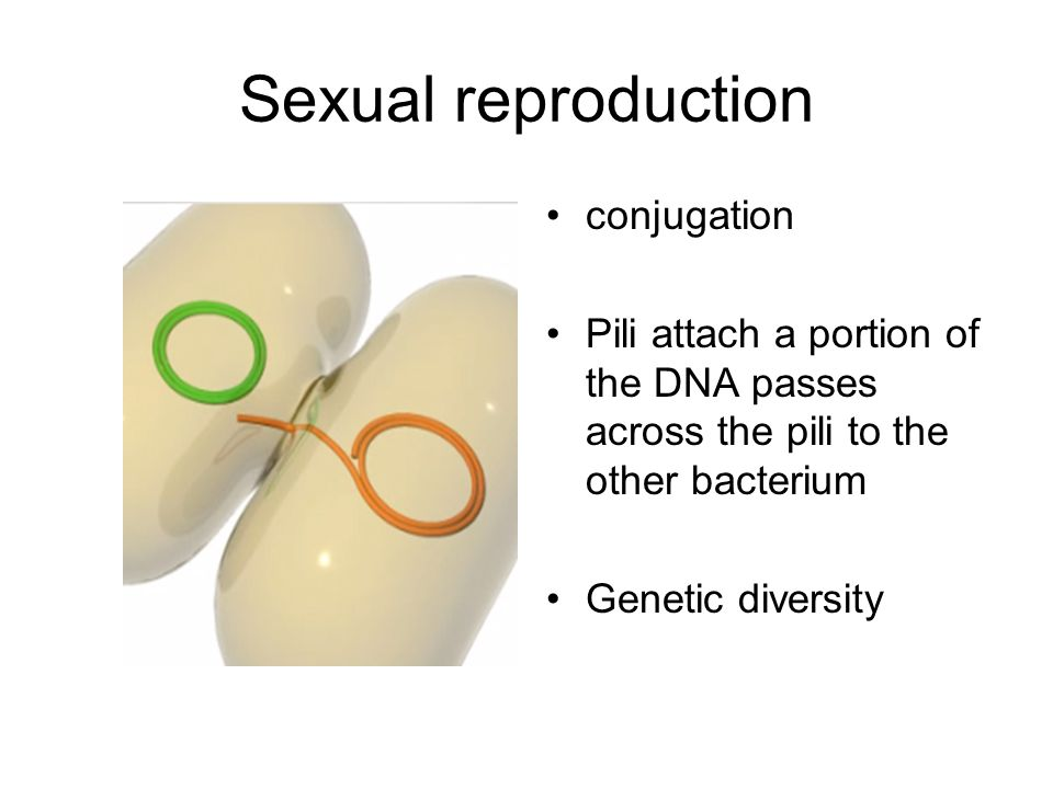 Sexual reproduction conjugation