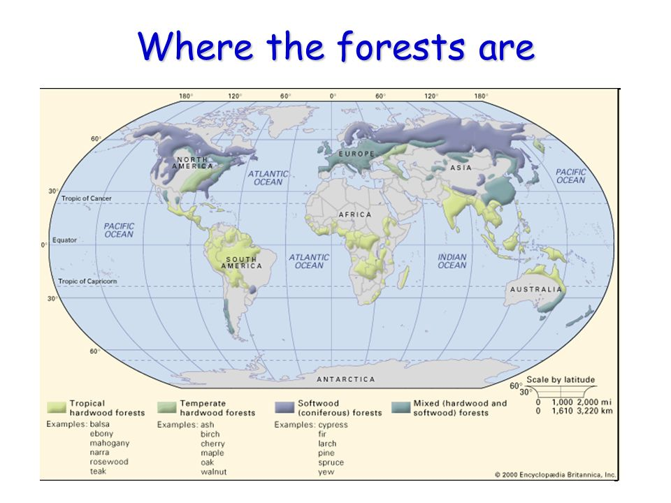 Where the forests are