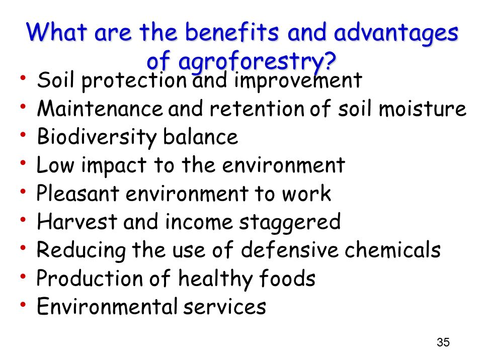 What are the benefits and advantages of agroforestry