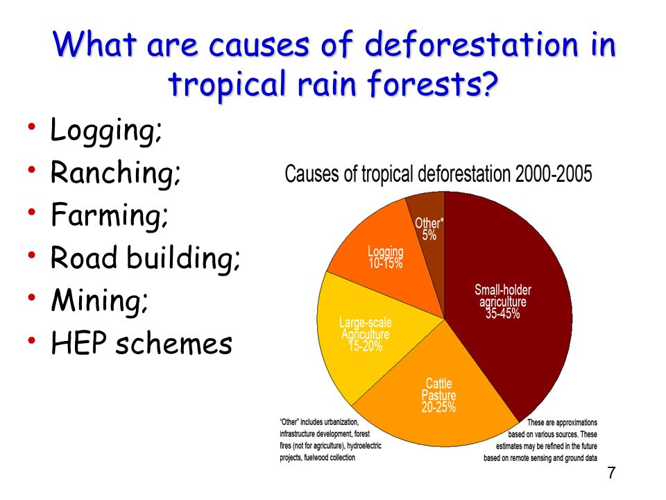 What are causes of deforestation in tropical rain forests
