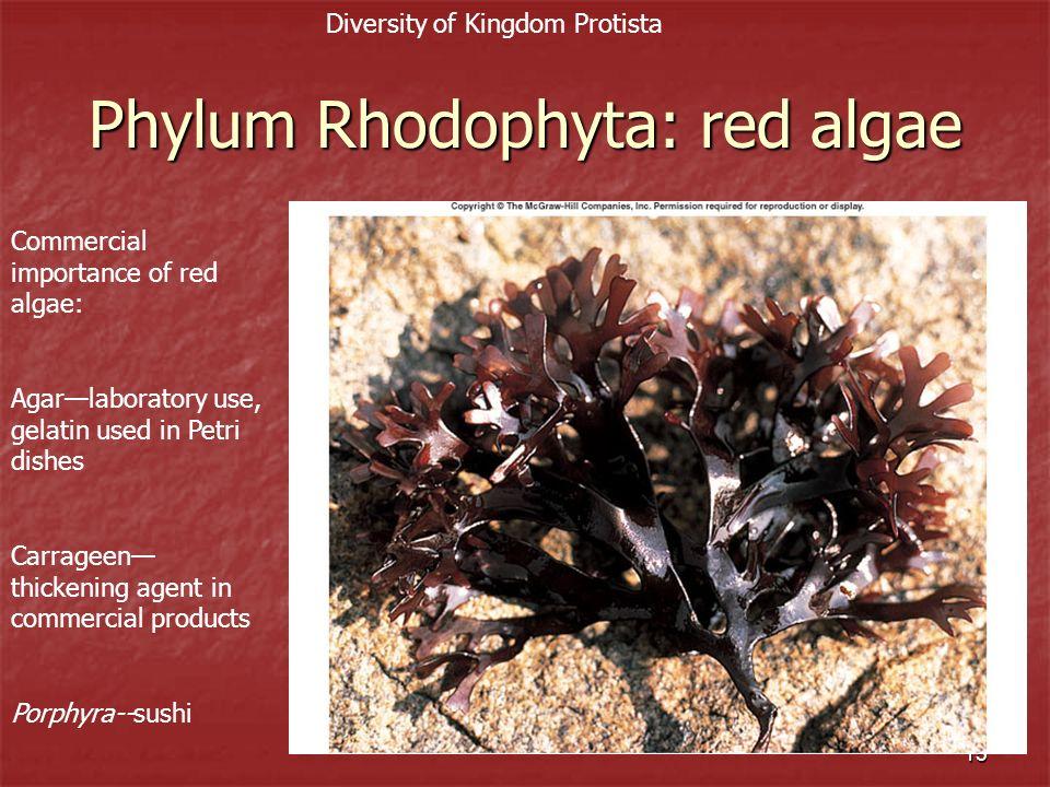 Phylum Rhodophyta: red algae