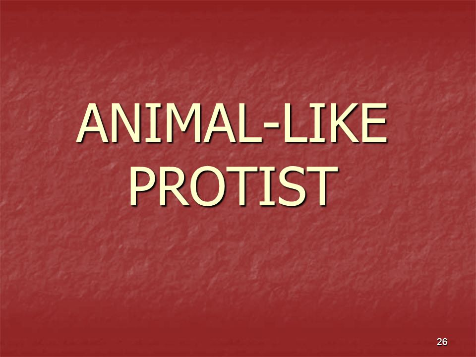 ANIMAL-LIKE PROTIST