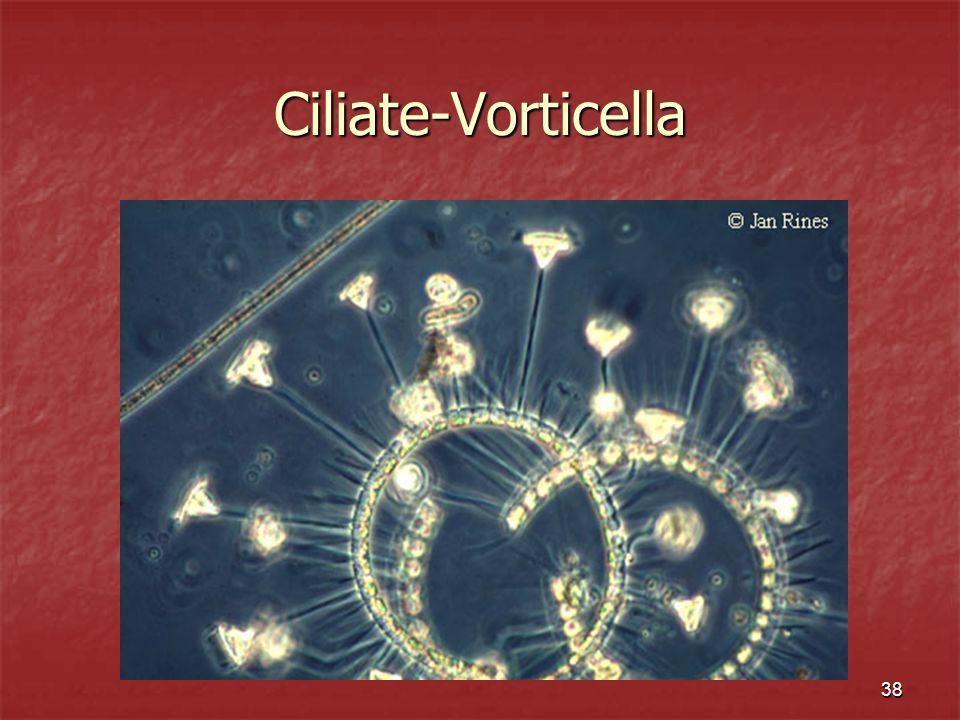 Ciliate-Vorticella