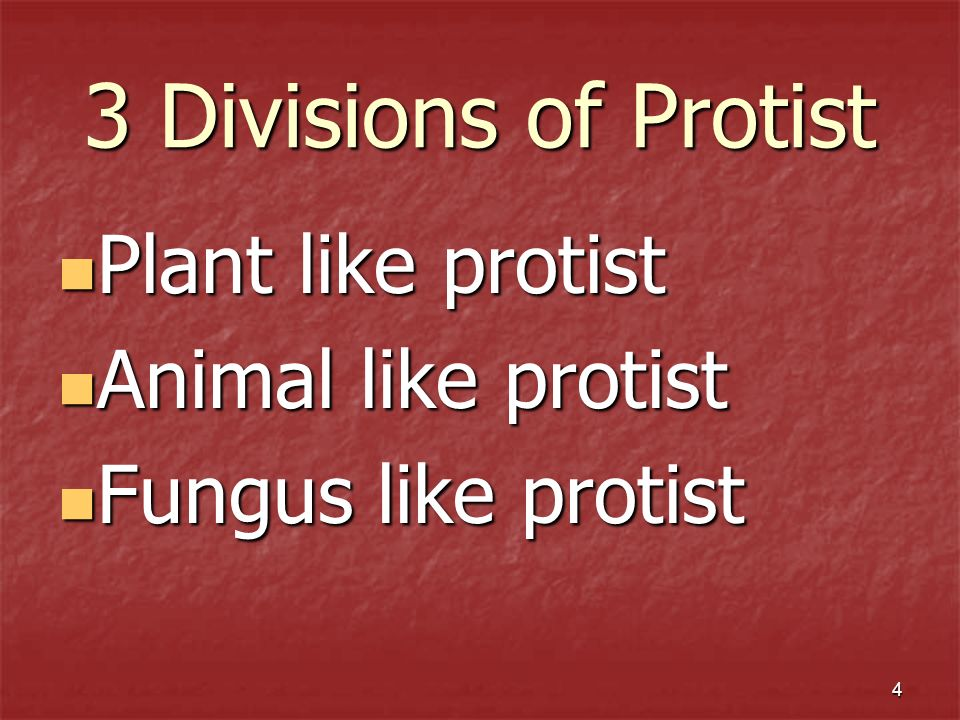 3 Divisions of Protist Plant like protist Animal like protist