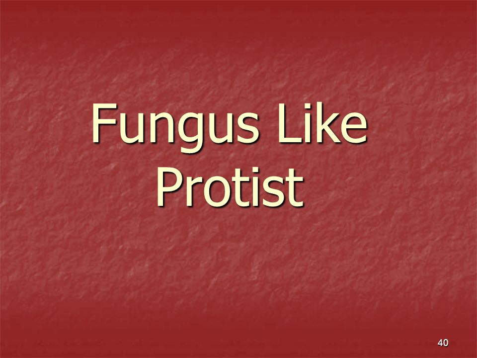 Fungus Like Protist
