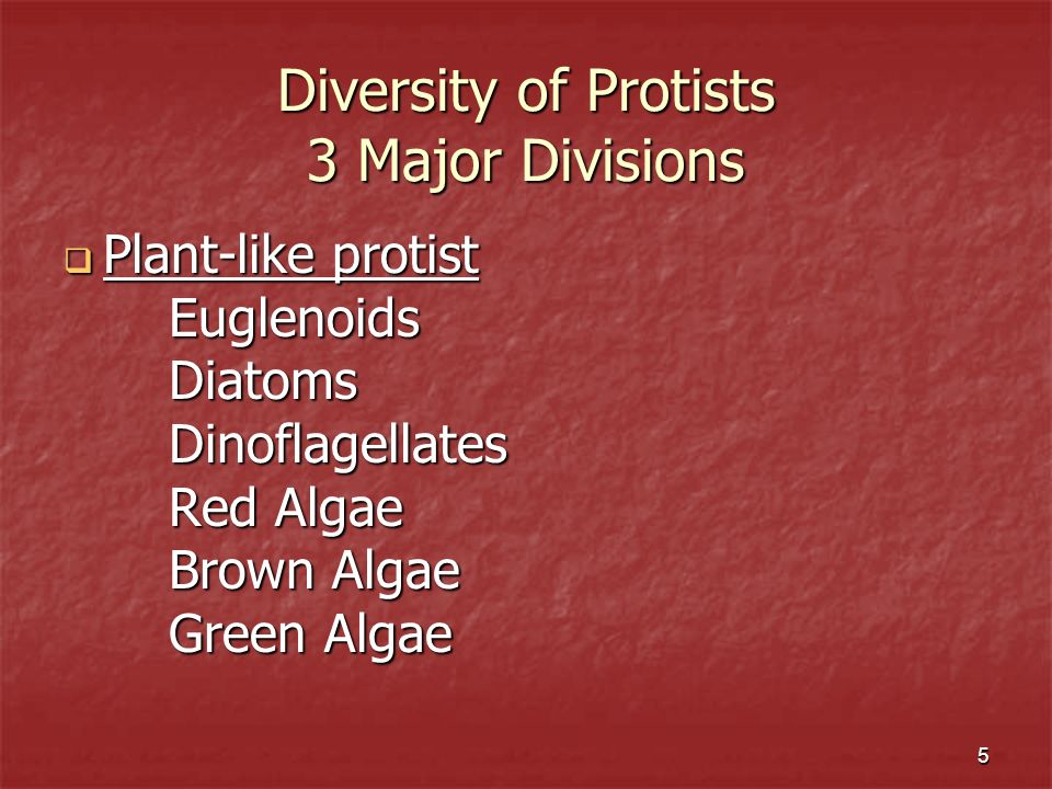 Diversity of Protists 3 Major Divisions